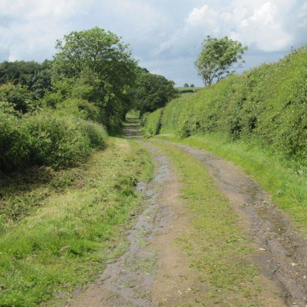Bayses Lane