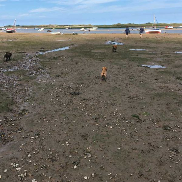 Walking To Blakeney Point At Low Tide