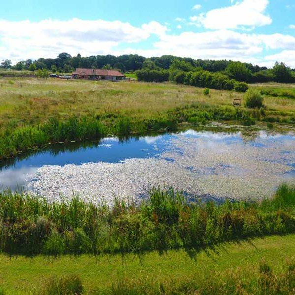 Bayses Barn Pond